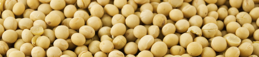 soybeans1